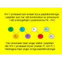 Avancerat dataprogram ger hopp om effektivare bromsmediciner mot HIV
