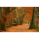 Perthshire forests to grow online