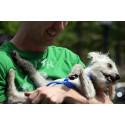 Hundkollen: Nöjda kunder