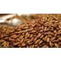 Insect Protein Market Research Report China 2015