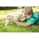 Barn som växer upp med hund har lägre risk att få astma