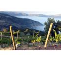 Santa Helenas vingård