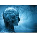 Nyhet: Ät skaldjur och skydda hjärnan