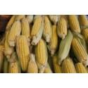 God spannmålsproduktion förväntas under 2013