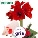 Skicka julblommor och skänk en gris