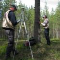 Fortsatt hög tillväxt i de svenska skogarna