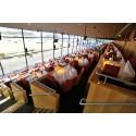 Solvalla Restauranger erbjuder halva priset på lokalhyra