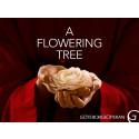Skandinavienpremiär för John Adams A Flowering Tree