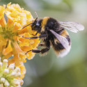 Rochdale Council's buzzing to save our bees