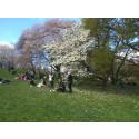 Besöksrekord i Botaniska trädgården