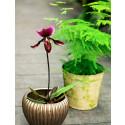 Härma naturen: Så får du orkidéerna att blomma längre