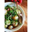 Potatissallad med linser och sparris