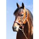 Maharajah - nominerad till Årets Häst