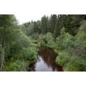 Grundvattnet visar naturvården var skogsbäckarnas artrikedom är störst