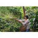An extra SEK 38 million to Fairtrade farmers