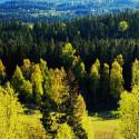 Framtidens skogsindustriella materialforskning