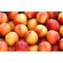 Hallå Ole- kan jag plantera ett persikoträd i växthuset?