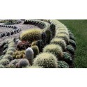Vem får pryda årets kaktusplantering?