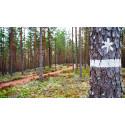 Miljoner till naturvård i Värmland