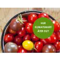 Bidra till en bättre miljö – ät vegetariskt under en vecka