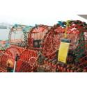Följ med Sjöräddningssällskapet på hummerpremiär