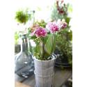 Orkidéutställning Orkidéer med vänner till Sundsvall