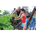 Odling stärker social hållbarhet