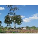 Colombia: Återlämning av stulen mark kantas av hot och långsamma processer