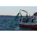 Ekspertråd mot fiskekrim