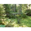 Blädad skog (hyggesfritt skogsbruk)