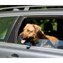 Varma bilar - dödsfälla för hundar