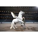 Formstarka ryttare lyfter Sweden International Horse Show