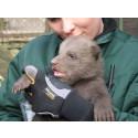 Björnungarna på Skånes Djurpark