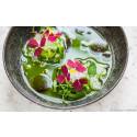 Gourmetmat till specialpris under Estlands restaurangvecka