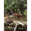 Tailor Store klimatkompenserar genom återplantering av regnskog i Sri Lanka
