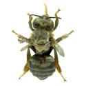 Virusangripet bi