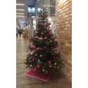 Vimpeln och Lions Club Alingsås samarbetar kring granar för en godare jul