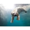 Ett arktiskt äventyr på Köpenhamns Zoo