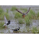 På lördag kan du hänga med medlemmar i Angarngruppen som visar dig fågellivet i sjön!