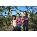 Griskulting till Nicaragua, 200 kr
