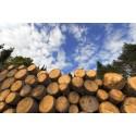 Formas delar ut 77 miljoner till forskning om skogsråvara och biomassa