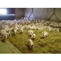 Pressinbjudan: Att kommunicera djurvälfärd