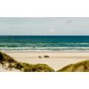 Blokhus på Nordjylland presenterar internationell sandskulpturfestival.