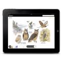 Fågelguiden – ny app med illustrationer i världsklass