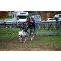 British Sleddog Dryland Racing Team competing for the first time in the IFSS World Dryland Championships in Canada Oct 2015