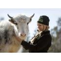 Artbevarande i fokus när Sveriges djurparker möts på Kolmården i veckan