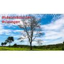Var med i Vi-skogens fototävling och ta chansen att bli Sveriges bästa trädfotograf!