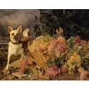 Hundkollen: 13 farliga saker för hundar