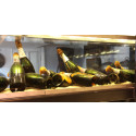 Antik vrakchampagne på årets champagnehelg!