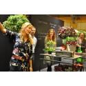 Korkskruvar och sprakande färger bland växtnyheterna hos Blomsterfrämjandet